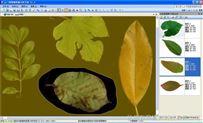 植物叶面积仪含病斑、虫损、叶色分档分析